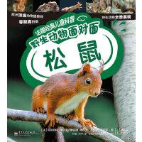 法国经典儿童科普. 野生动物面对面―松鼠
