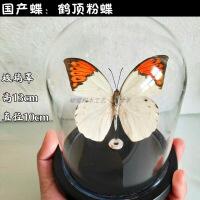 真蝴蝶标本昆虫标本玻璃罩防尘罩摆件生日礼物水晶球永生花工艺品 其他长方形尺寸独立