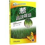 葱高效栽培(高效种植致富直通车)