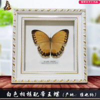真蝴蝶标本昆虫相框巴黎碧凤青凤蝶 工艺品收藏生日结婚* 其他正方形尺寸独立