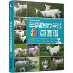羊病临床诊治彩色图谱