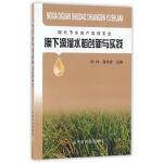 膜下滴灌水稻创新与实践