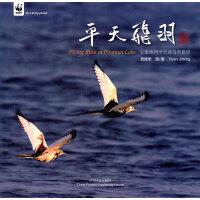 平天飞羽―安徽池州平天湖鸟类摄影