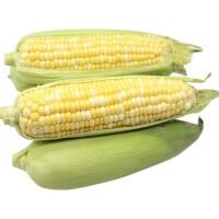 【包邮】广西水果玉米5斤装 新鲜蔬菜 生鲜时蔬