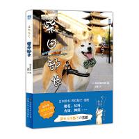【正版现货】柴田部长 [日] 和诗俱乐部/著 京都风情和可爱柴犬 你可以全都要 精装 柴田部长 动漫绘本 力潮文创