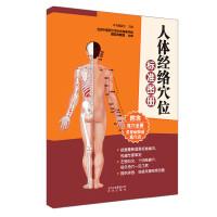 人体经络穴位标准图册