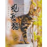 观复猫:博物馆的美一天