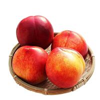 【包邮】山东油桃鲜甜桃子5斤精品装 新鲜水果