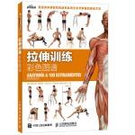 拉伸训练彩色图谱 体能伸展训练完全图解 囚徒健身科学运动健美 增肌无器械健身教练 健美提高身体柔韧性 女无器械运动健身