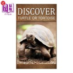 【中商海外直订】Turtle Or Tortoise - Discover: Early reader's wildl