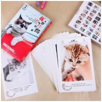 我要做你的猫 新款36张卖萌猫明信片 可爱慵懒灵气猫咪留言卡片