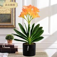 家用君子兰仿真花盆景套装假花绿植客厅室内玄关电视柜摆放装饰花吧台SN3264