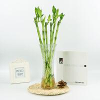 富贵竹水培植物转运开运竹花卉绿植盆栽绿萝室内花客厅水养节节高