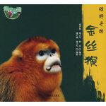 绿野寻踪―金丝猴