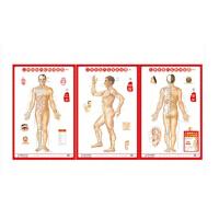 人体经络穴位标准挂图(男性)(1套3张挂图)医学挂图用图 男性人体经络大挂图家用中医美体针灸艾灸养生保健穴位图