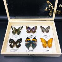昆虫标本真虫蝴蝶标本锹甲独角仙蝉蝗虫甲虫科普教学立体框 其他正方形尺寸独立