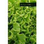 【预订】Budget Planner: Salad and Broccoli Cover. Monthly Budge