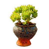 老桩多肉植物组合盆栽盆栽花卉肉肉植物室内绿植