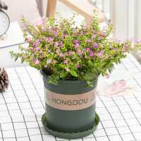 满天星开花植物大盆栽室内花卉带花苞观花植物鲜花桌面绿植满天星