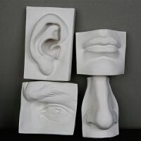 画材艺考一套大卫石膏五官石膏像实面眼耳鼻嘴模型素描静物美术教具人物雕塑雕像摆件