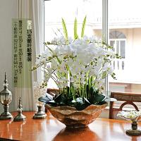 手感仿真蝴蝶兰套装绿植盆栽花艺室内客厅干花摆设装饰假花卉 乳白色 15支莹白大船金盆