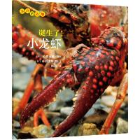 生命的故事系列:诞生了!小龙虾