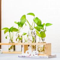 办公室装饰桌面摆件水养花盆小清新客厅植物玻璃花瓶