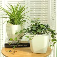 绿萝花卉盆栽薄荷植物室内盆栽文竹绿植水培植物
