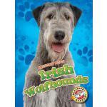 【预订】Irish Wolfhounds