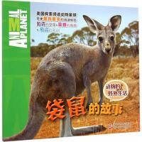 动物的野外生活:袋鼠的故事 (美)考斯廷,于梅 浙江少年儿童出版社【新华书店 值得信赖】