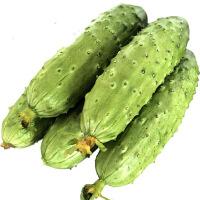 【包邮】广西洋葱西红柿娃娃菜组合5斤装 新鲜蔬菜 生鲜时蔬