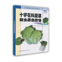 十字花科蔬菜病虫原色图谱――无公害蔬菜病虫鉴别与治理丛书